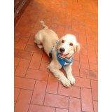 Serviço de Adestramentos de Cachorro Filhote preço em São Caetano do Sul