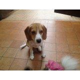 Serviço de Adestramentos de Cachorro preços no Jardim Mendes Gaia