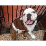Serviço de Adestramentos de Cachorro quanto custa em média no Jardim Santa Emília