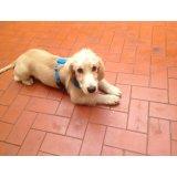 Serviço de Adestramentos de Cachorro valor na Vila Lageado