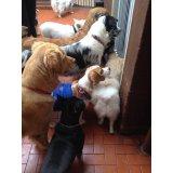 Serviço de Babá de Cachorros como contratar na Chácara Flora
