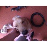 Serviço de Babá de Cachorros preço na Vila Clementino