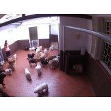 Serviço de Babá de Cachorros preços no Centro