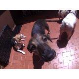 Serviço de Day Care Canino no Centro