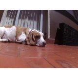 Serviço de Day Care Canino preço na Vila Congonhas