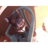 Serviço de Day Care Canino preços no Campo Belo