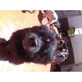 Serviço de Day Care Canino valores no Retiro Morumbi
