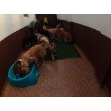 Serviço de Daycare Canino na Oswaldo Cruz