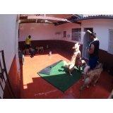 Serviço de Daycare Canino valor na Chácara Pouso Alegre