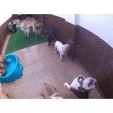 Serviço de Daycare Canino valores no Jardim Maria Emília