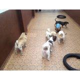 Serviço de Dog Sitter contratar no Parque Bristol