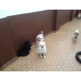 Serviço de Dog Sitter onde tem no Sacomã