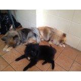 Serviço de Dog Sitter preço em Cata Preta