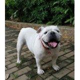 Serviço de Dog Sitter preços em Cerqueira César