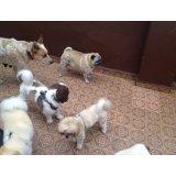 Serviço de Dog Sitter quanto custa na Chácara Maranhão