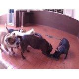 Serviço de Dog Sitter SP