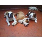 Serviço de Dog Sitter valor  no Jardim Maria Estela