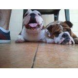 Serviço de Dog Sitter valores na Vila Ernesto