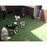 Serviço de Passeador de Cães na Vila Natália