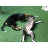 Serviço de Passeador de Cães valor na Vila Diadema