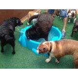 Serviço Dog Sitter quanto custa em média em Ferrazópolis