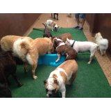 Serviço Dog Sitter valores em Mauá