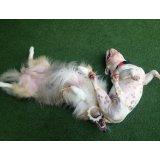 Serviços de Adestrador de Cães na Vila Internacional