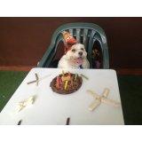 Serviços de Adestrador de Cães preços na Vila Guaraciaba
