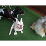 Serviços de Adestrador de Cães valor na Vila Buarque