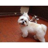 Serviços de Adestradores de Cães no Parque Andreense
