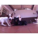 Serviços de Day Care Canino na Vila Alpina