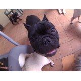 Serviços de Daycare Canino na Vila Monumento