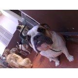 Serviços de Daycare Canino preço no Centro