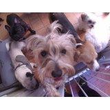 Serviços de Daycare Canino preços no Belenzinho
