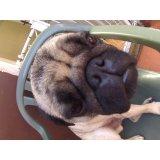 Serviços de Daycare Canino quanto custa em média no Panamby