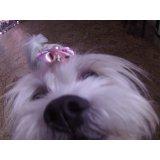 Serviços de Daycare Canino valores em Camilópolis