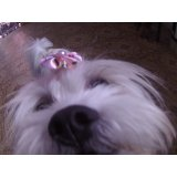 Serviços de Daycare Canino valores na Vila Charlote