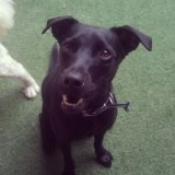 Valor Adestrador Canino na Vila Libanesa