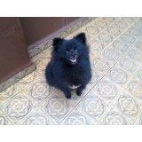 Valor Adestramento de Cães na Vila Gomes