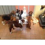 Valor Adestramentos de Cachorro no Jardim Santo Antônio de Pádua