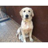 Valor de Hospedagem Canina na Vila Gomes