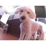 Valor de Serviços de Daycare Canino no Jardim Itália