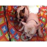 Valor do Adestramento de Cães na Vila Liviero