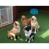 Valor Hotéis para Cães no Parque do Carmo