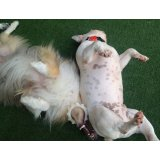 Valor Passeadores de Cachorro no Parque Gerassi