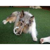 Valor Serviço de Adestrador de Cães no Jardim Irene