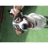 Valores Adestradores de Cães na Casa Grande