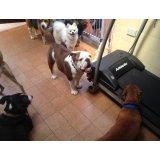 Valores Adestramentos de Cachorro no Demarchi