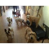 Valores da Hospedagem Canina no Jardim Avelino