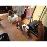Valores de Adestramentos de Cachorro na Vila Nogueira